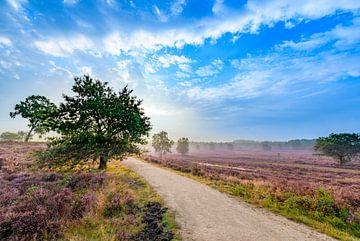 Bloeiende heide in heidelandschap bij zonsopkomst in de zomer op de Veluwe van Sjoerd van der Wal