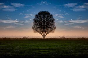 Zonsopgang in IJlst in Friesland met een boom en een oranje achtergrond. One2expose Wout Kok Photogr
