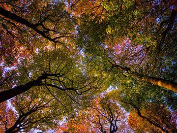 Kaapse Bos 1 van Henk Leijen