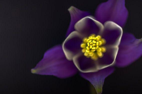Purple van Klaas Fidom