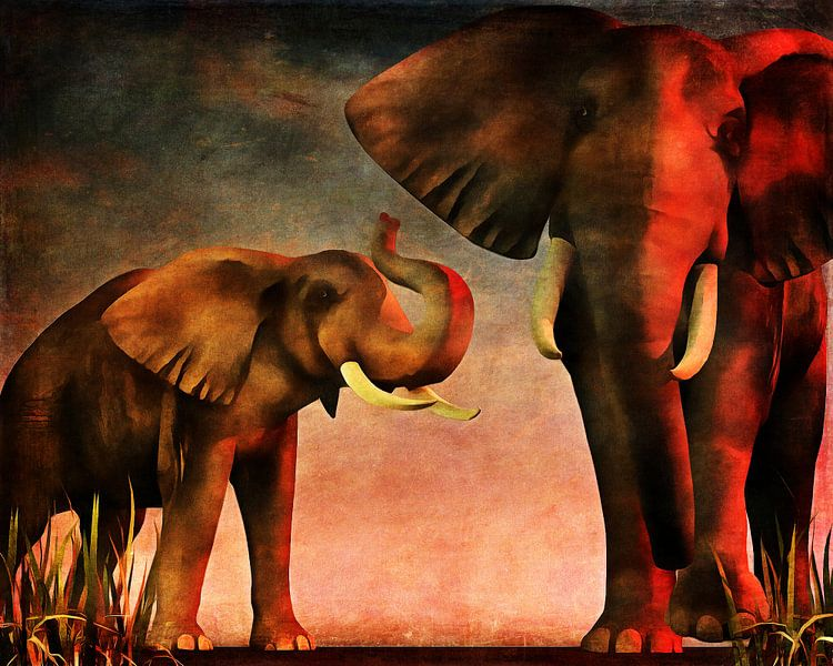 Dierenrijk – Olifanten hebben je gezien en komen op je af (Nous vous avons vu) van Jan Keteleer