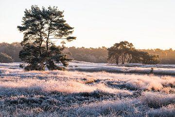 Een ijzige ochtend op de Sonse Heide von H Verdurmen