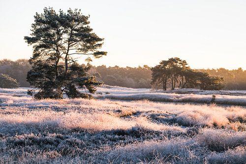 Een ijzige ochtend op de Sonse Heide van