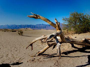 Boom in de woestijn van Koen van der Werf