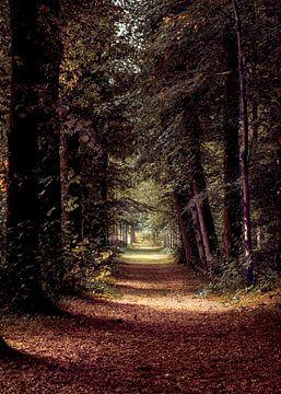 Ein märchenhafter Waldweg im Heilooërbos von Dana Oei fotografie