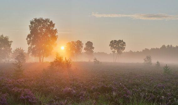 Zonsopkomst Rucphense Heide van Jos Pannekoek