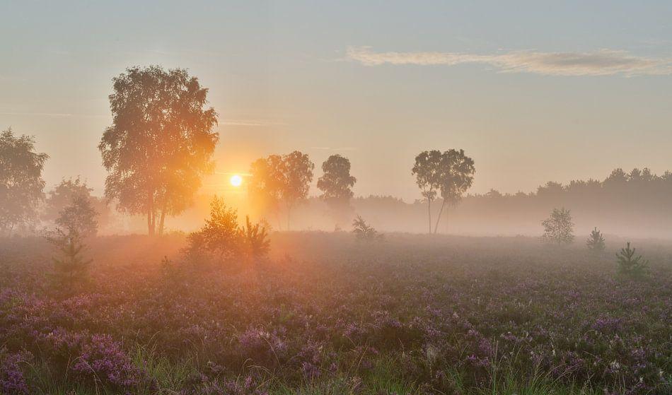 Zonsopkomst Rucphense Heide