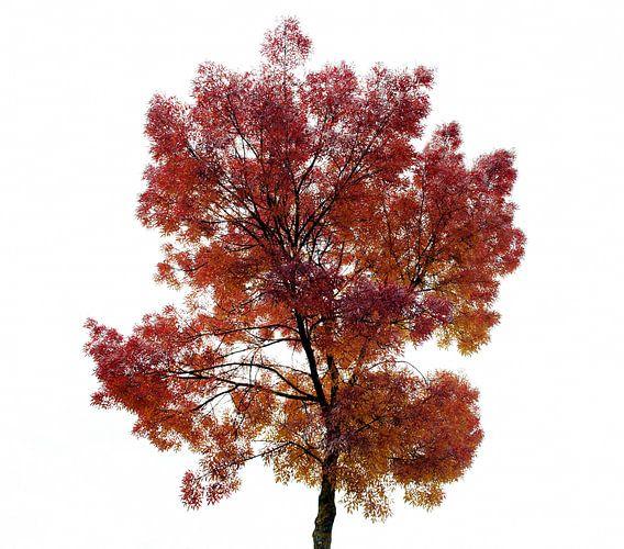 Herfst van Christiaan Krouwels