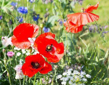 Wilde bloemen van Freya Colman