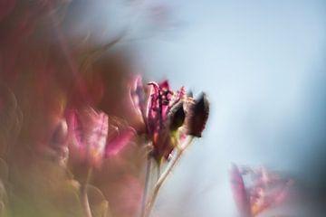 Orchidee von Elly Besselink