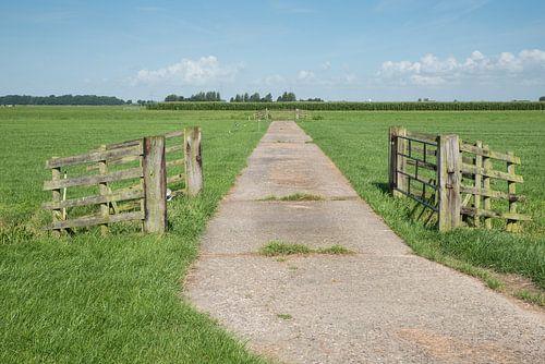 Verhard pad in weiland met hekwerken polderlandschap Alblasserwaard van