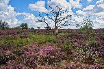 Toter Baum in der blühenden Heide von Ron Poot