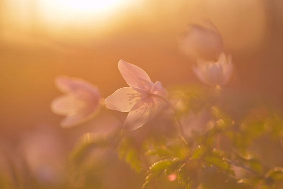 finally springtime van jowan iven