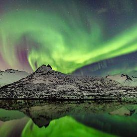 Nordlichter, Polarlicht oder Aurora Borealis im nächtlichen Himmel über den Lofoten in Nord-Norwegen von Sjoerd van der Wal Fotografie