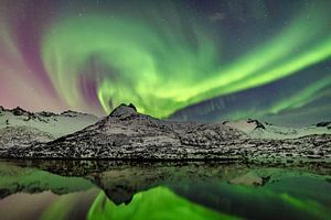 Noorderlicht, poollicht of Aurora Borealis in de nachtelijke hemel boven de Lofoten in Noorwegen