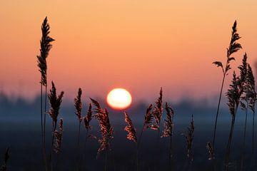 Sonnenaufgang im Polder von Willian Goedhart