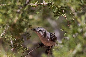 Volgel in de natuur van Kimberley Helmendag