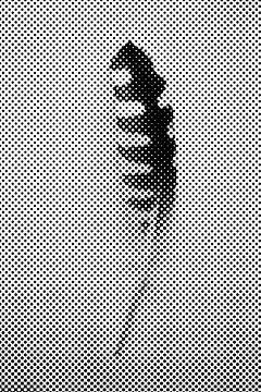 Feder im Gitter von Studio Maria Hylarides