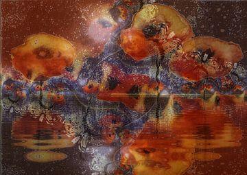 Mohnblumen - Wassermohn van Christine Nöhmeier