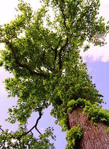 Tree Magic 102