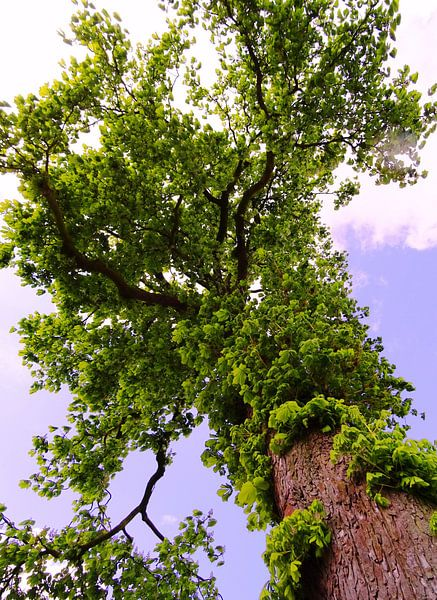 Tree Magic 102 van MoArt (Maurice Heuts)