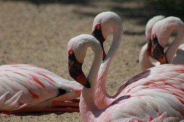 Flamingo's van Tineke Kooistra