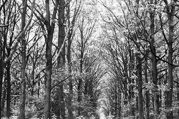 Bäume, schwarz und weiß von Nynke Altenburg