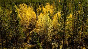 Bomen in herfstkleuren van