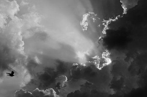 Vlieg in zwart-wit naar de zon. van
