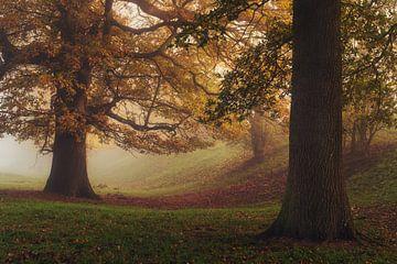 De vriendelijke eikenboom van Joris Pannemans - Loris Photography