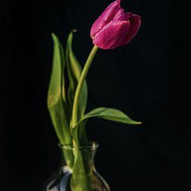 Tulipe violette sur Wendy Bos