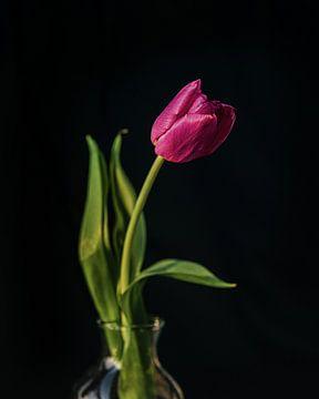 Paarse tulp van Wendy Bos