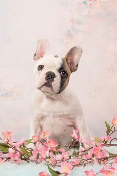 Welpe einer französischen Bulldogge von Elles Rijsdijk