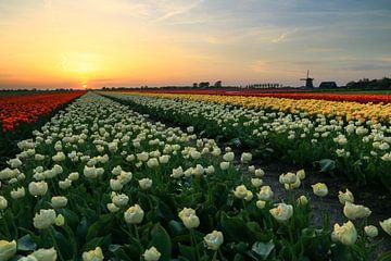 Veelkleurig tulpenveld met molen van FotoBob