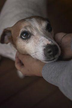 Hond in Handen van Tom Paquay