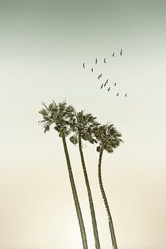 Vintage Palmen im Sonnenuntergang