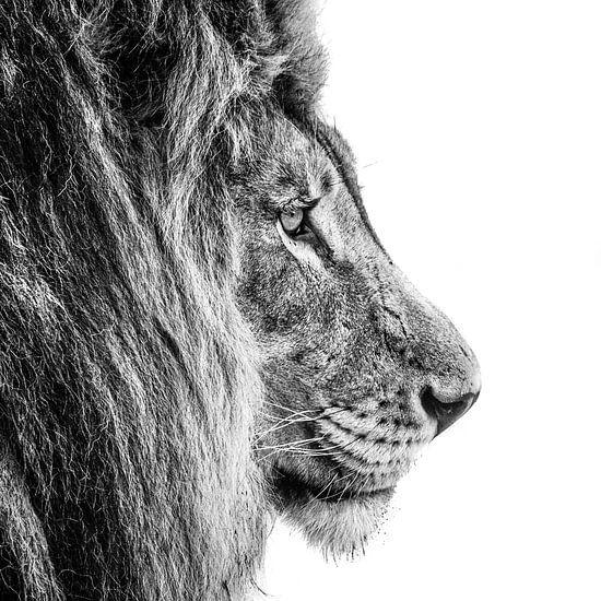 King of the Jungle vierkant van Imca van de Weem
