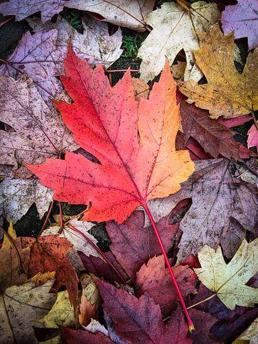 Herfst passie van
