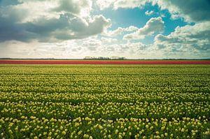 Tulpen in alle kleuren