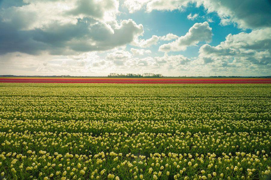 Tulpen in alle kleuren van Joris Pannemans - Loris Photography