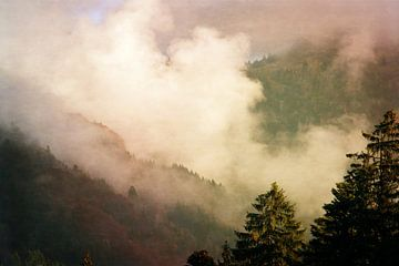 zon tegen mist van Susann Serfezi