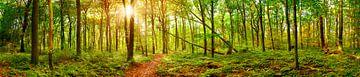 Waldpanorama von Günter Albers