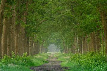 Lente in het bos van Michel Knikker
