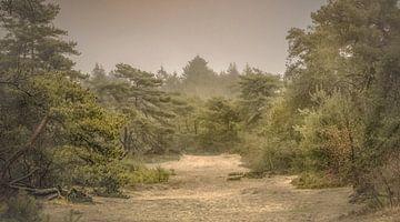 Herfstdag in bos van Teo Goudriaan