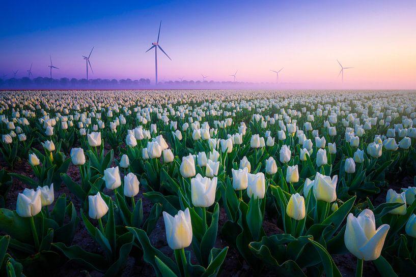 Witte Tulpen met Windmolens van Albert Dros