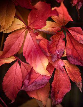 Herfst bladeren achtergrond van Egon Zitter