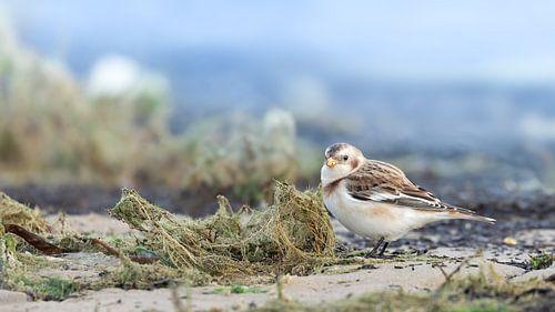 Vogels op het strand