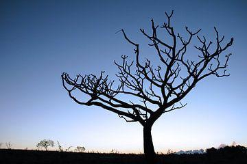 Zonsondergang Landschap no. 7 van Adriano Oliveira