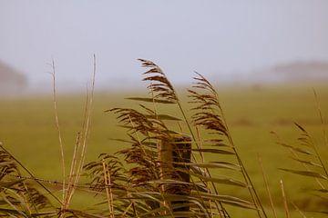 Waaiend gras von Gertjan Hesselink