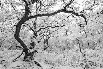 Winter-Wunderland von Marc Molenaar